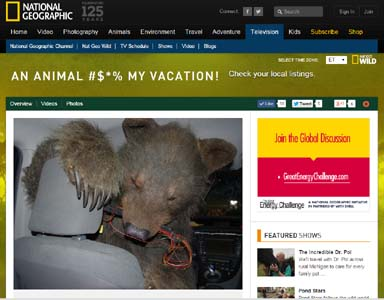 national geographic bear